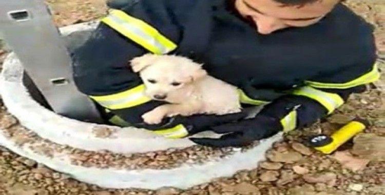 Kuyuya düşen köpeği itfaiye kurtardı, o anlar kameraya yansıdı