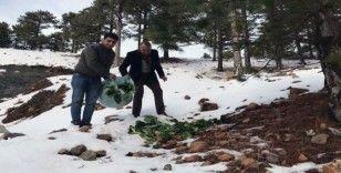 Muğla'daki yaban hayvanlarına yem