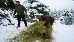 Tokat'ta yaban hayvanları için 5 ton yem