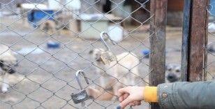 100'e yakın köpeği beslemeye gittiklerinde şok yaşadılar