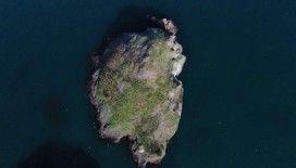 Kuşların Ordu'daki yaşam alanı: 'Hoynat Adası'