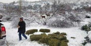 Yaban hayvanları için doğaya yem bırakıldı