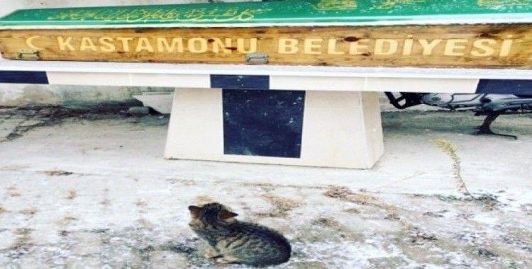 Hayatını kaybeden hayvanseveri, beslediği kedisi yalnız bırakmadı