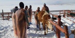 Kars Bölgesi VHO'nun bakanlık onaylı suni tohumlama kursu başladı