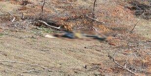 Çanakkale'de kayıp şahıs ölü bulundu