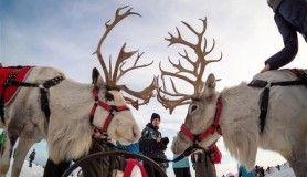 Rusya'da 'İglo Festivali' renkli görüntülere sahne oldu