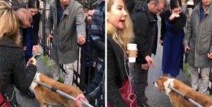 Hayvanseverlerden Beşiktaş Belediyesi'ne tepki