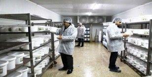 Van'da gıda denetimi seferberliği