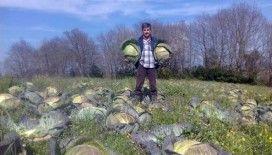 Sakarya'da lahana fiyatları çiftçinin yüzünü güldürmedi