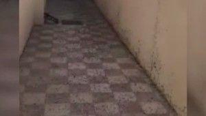 Umman'da karınca istilası