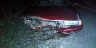 Otomobil domuz sürüsüne çarptı
