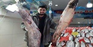65 kilogramlık yayın balığı yakaladı