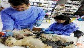 Ziftten kurtarılan kaplumbağalardan biri öldü, köpek ve diğerlerinin tedavisi sürüyor