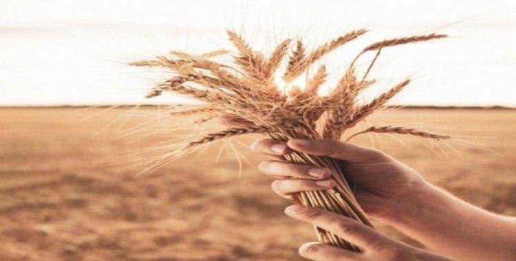 TARSİM'den 'buğday sigortası için geç kalmayın' çağrısı