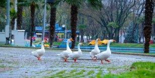 Bursa'da parklar sağlık için kapatıldı