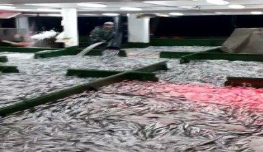 Çanakkale'de 15 ton hamsi yakalandı