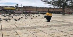Meydanlar boş kalınca güvercinleri belediye ekipleri besledi
