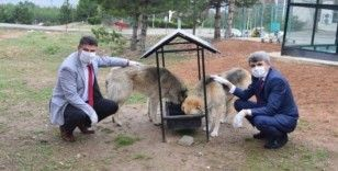 DPÜ Kampüsündeki hayvanlara mama verildi