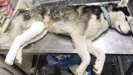 Sahip çıktığı sokak köpeğinin tedavisini de üstlendi