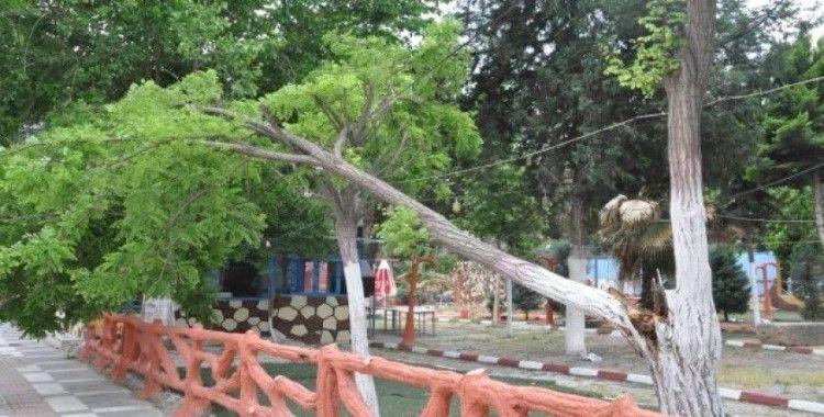Şiddetli rüzgar ağaçları devirdi