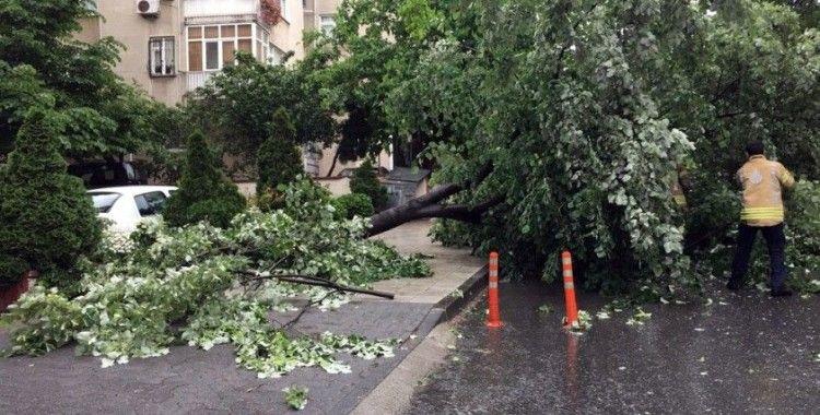 Kadıköy'de fırtına nedeniyle ağacın devrilme anı kamerada