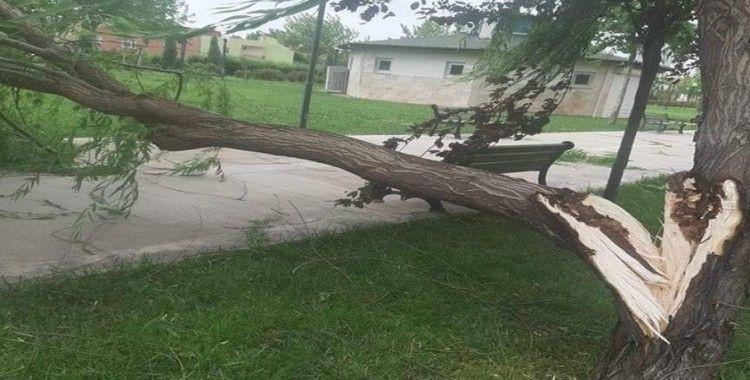 Şiddetli rüzgara dayanamayan ağaç kırıldı