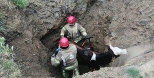 4 metrelik kuyuya düşen gebe ineği kurtarmak için ekipler seferber oldu
