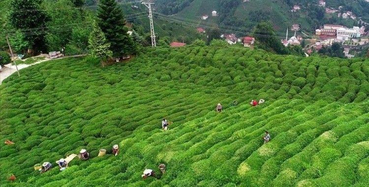 Türk çayı ihracatı ilk 4 ayda 5,2 milyon dolar kazandırdı