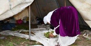 Terörün kökü kazındı yaylalar göçerlerle dolup taştı