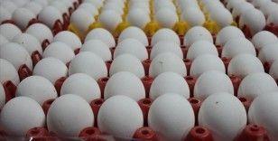 Yumurta üreticileri İran üzerinden ihracata başlamaya hazır