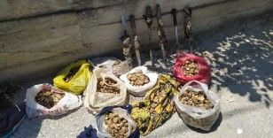 Kaçak salep bitkisi toplayan şahıslar yakalandı