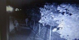 Diyarbakır'da bir garip hırsızlık, yıllarca gözü gibi baktığı ağaçları çalındı