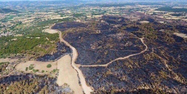 Çanakkale'de yanan ormanlık alan yeniden ağaçlandıracak
