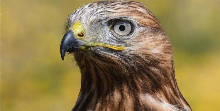 Van'da tedavileri tamamlanan 23 kuş doğaya bırakıldı