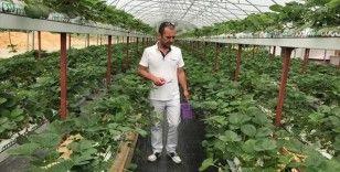 Köyüne kurduğu topraksız tarım serasında çilek üretiyor