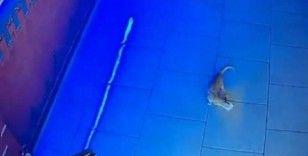 Kasadan para çalan kedi kameraya böyle yakalandı