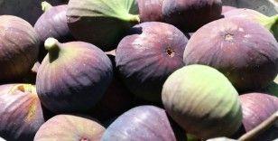 Siyah incir ihracatında hedef 60 milyon dolar