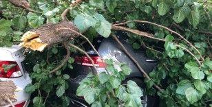 Şişli'de çürüyen ağaç devrildi