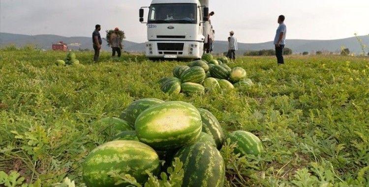 'Osmaneli karpuzu' mevsimlik işçilere ekmek kapısı oluyor