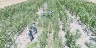 Mısır tarlasına uyuşturucu oparasyonu