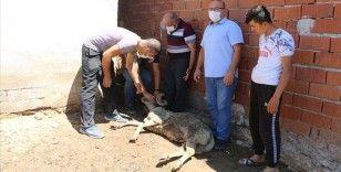 Manisa'daki toplu hayvan ölümleri hakkında inceleme başlatıldı