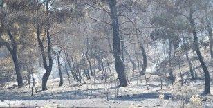 Manisa'daki orman yangını tamamen kontrol altına alındı