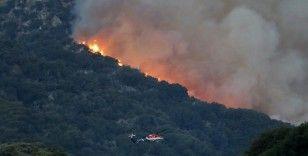 ABD'de 20 bin dönümden fazla ormanlık alan küle döndü