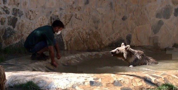 Ayı Silva havuzunda banyo yaptı, vatandaşlar ilgiyle izledi