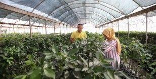 TİGEM'den çiftçiye 'yerli ve milli sebze tohumu' katkısı