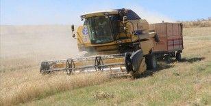 Yozgat'ta üretilen samanlar yurdun dört bir yanına gönderiliyor