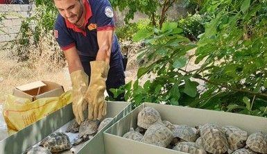 Kullanılmayan evin bahçesinden onlarca kaplumbağa çıktı