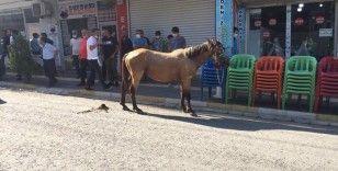 Nusaybin'de ürken at çarşı merkezini birbirine kattı