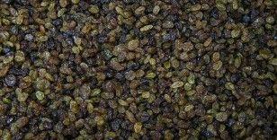 TMO kuru üzüm alımlarına başlıyor