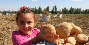 Patates tarlalarında çalışmak için binlerce kilometre uzaktan geliyorlar